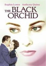image for the black orchid
