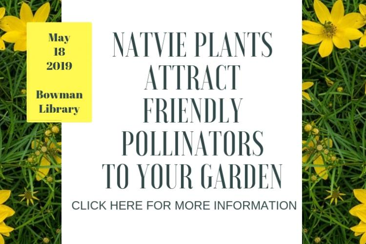 Native Plants Attract Friendly Pollinators to Your Garden