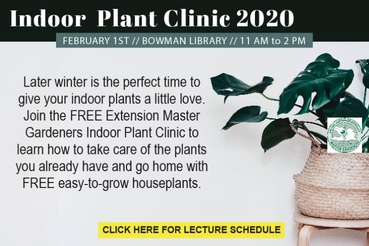 Indoor Plant Clinic 2020 Bowman